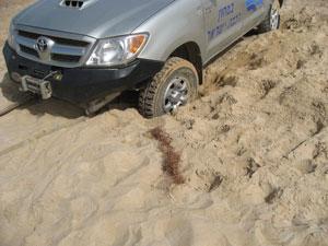 חילוץ שטח מחוף הים חילוץ עי כננת